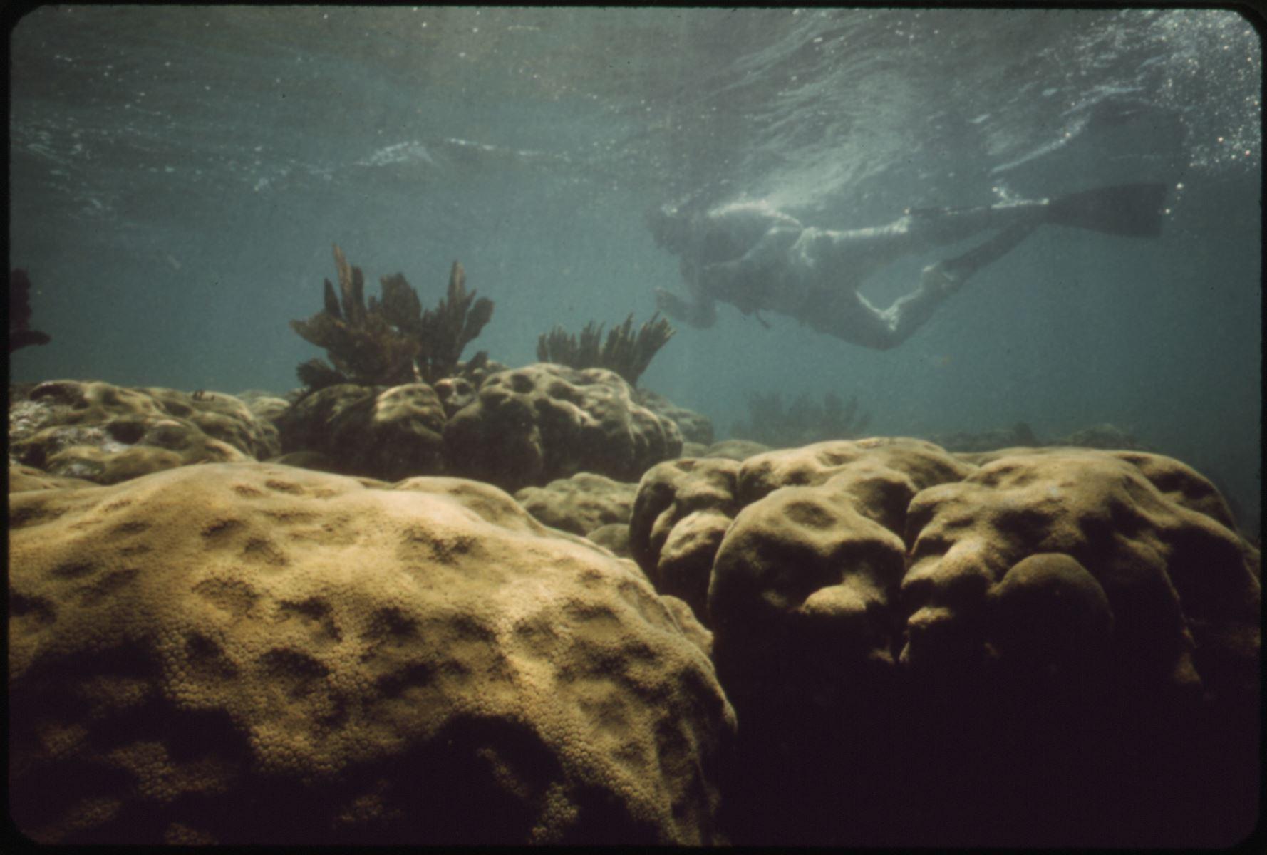 John Pennekamp Key Largo Diving